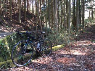 山城多賀の林道_compressed